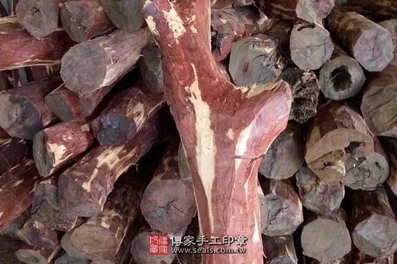 雞血紅木的原木照片4