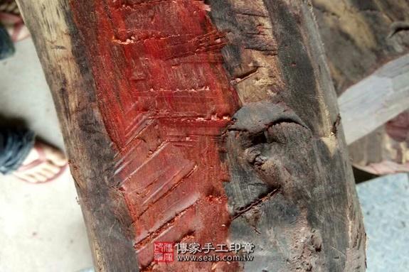 雞血紅木的原木照片5